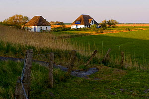 Houses with reed roofs, Around Westerhever, Germany, April 2009  -  Wild Wonders of Europe / Novák