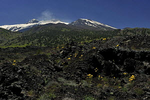 Old lava flow on the eastern side of Mount Etna volcano, Sicily, Italy, May 2009  -  Wild Wonders of Europe / Grunewald