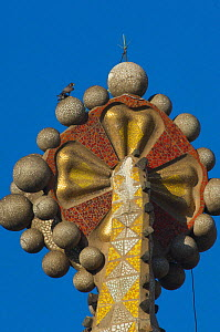 Peregrine falcon (Falco peregrinus) on one of the Sagrada familia cathedral spires, designed by Gaudi, Barcelona, Spain, April  -  Wild  Wonders of Europe / Geslin