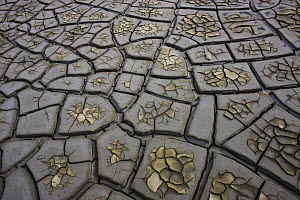 Drought patterns in muddy soil, Camargue, France, May 2009  -  Wild Wonders of Europe / Allofs