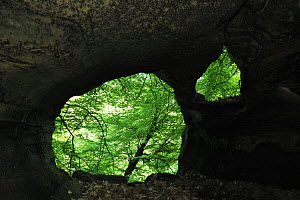 W�lkeschkummer, small cave, Echternach, Mullerthal, Luxembourg, May 2009  -  Wild Wonders of Europe / T�nning