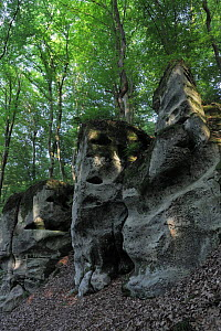 Sandstone formations and Beech trees (Fagus sylvatica) Echternach, Mullerthal, Luxembourg, May 2009  -  Wild Wonders of Europe / T�nning
