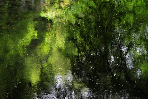 Reflections in stream near the Schiessent�mpel waterfall, Consdorf, Mullerthal, Luxembourg, May 2009  -  Wild Wonders of Europe / T�nning