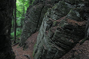 Sandstone formation in a European beech forest (Fagus sylvatica) Beaufort, Mullerthal, Luxembourg, May 2009  -  Wild Wonders of Europe / T�nning