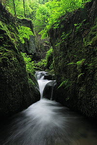 Halerbach / Haupeschbach, a small stream flowing past moss covered rocks in forest, Beaufort, Mullerthal, Luxembourg, May 2009  -  Wild Wonders of Europe / T�nning