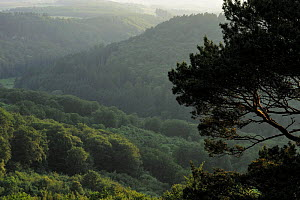 View of woods near Berdorf, Mullerthal, Luxembourg, May 2009  -  Wild Wonders of Europe / T�nning