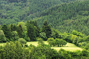 Field surrounded by trees near the Esch-Sur-S�re dam, Oesling, Ardennes, Luxembourg, May 2009  -  Wild Wonders of Europe / T�nning