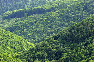 Tree covered hills in the Ardennes, Oesling, Luxembourg, May 2009  -  Wild Wonders of Europe / T�nning