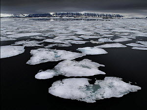 Broken up ice floating on sea, Svalbard, Norway, June 2009  -  Andy Rouse