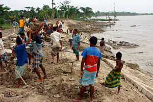 A sea wall being built to protect fishing village from floods, in response to rising sea levels due to climate change, Sundarbans, Bangladesh, June 2008  -  David Woodfall