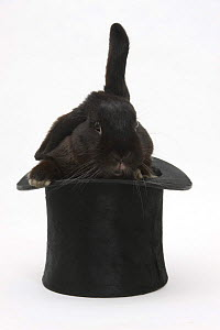 Black rabbit with windmill ears in a black top hat. - Mark Taylor