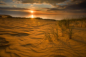 Sunrise over sand dunes on Agilos Kopa, Nagliai Nature Reserve, Curonian Spit, Lithuania, June 2009  -  Wild Wonders of Europe / Hamblin
