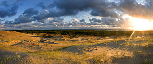 Sand dunes in evening light, Nagliai Nature Reserve, Curonian Spit, Lithuania, June 2009  -  Wild Wonders of Europe / Hamblin