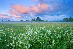 Wildflower meadow at dawn, Nemunas Delta, Lithuania, June 2009  -  Wild Wonders of Europe / Hamblin