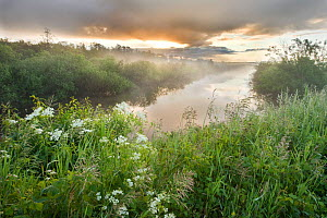 Dawn light over wetland habitat, Nemunas Regional Reserve, Lithuania, June 2009  -  Wild Wonders of Europe / Hamblin