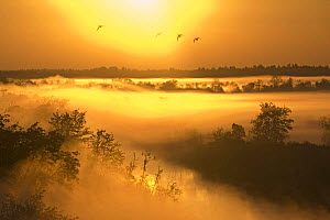 Mist over the Kasari river at sunrise, Kloostri, Matsalu National Park, Estonia, May 2009  -  Wild Wonders of Europe / Rautiainen