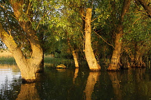 Trees in the Danube Delta, Romania, May 2009  -  Wild Wonders of Europe / Presti
