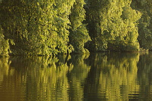 Trees on the river bank reflected in water, Danube Delta Scenery, Romania, May 2009  -  Wild Wonders of Europe / Presti
