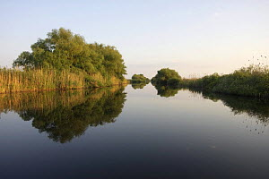 River Danube with reflections in water, Danube Delta Scenery, Romania, May 2009  -  Wild Wonders of Europe / Presti