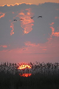 Danube Delta at sunrise, Romania, May 2009  -  Wild Wonders of Europe / Presti