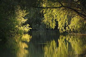 Danube Delta with trees reflected in water, Romania, May 2009  -  Wild Wonders of Europe / Presti