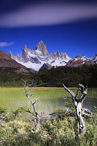 Cerro Fitz Roy, seen across reed-filled lake, Los Glaciares National Park, Argentina February 2009  -  Michael Hutchinson
