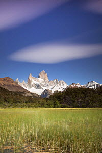 Cerro Fitz Roy and reed-filled lake, Los Glaciares National Park, Argentina February 2009  -  Michael Hutchinson