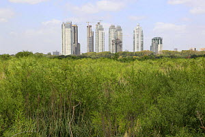 New buildings of Puerto Madero seen from Costanera Sur Nature Reserve, Buenos Aires, Argentina February 2009  -  Michael Hutchinson