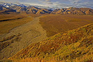 Aerial view of Polychrome Basin and braided, dried  riverbed in Denali National Park, Alaska, USA, autumn, September 2008 - Jeff Vanuga