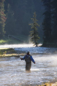 Man fly fishing for trout in a river in the Shoshone National Forest, Wyoming, USA, model released. July 2008 - Jeff Vanuga