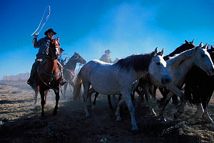 Cowboys working for the Bureau of Land Management round up wild horses / mustangs to remove them from public land, Red Desert, Wyoming, USA. Model released - Jeff Vanuga