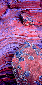 Petrified sandstone formation with bold striated patterns and lichen covered stones, Paria Canyon-Vermilion Cllffs Wilderness, Arizona, USA - Jack Dykinga