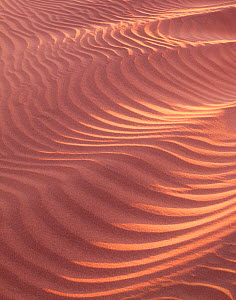 Sand dunes with patterns caused by wind, Mosquito Flats, Death Valley National Park, California, USA  -  Jack Dykinga