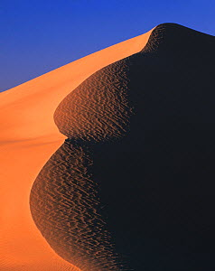 Sand dunes in evening light, East Mojave Desert, California, USA  -  Jack Dykinga