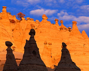 Tent rocks in the Peralta Canyon, New Mexico, USA. Rocks are conical formations of eroded volcanic tuff and pumice supporting 'cap rocks'. - Jack Dykinga