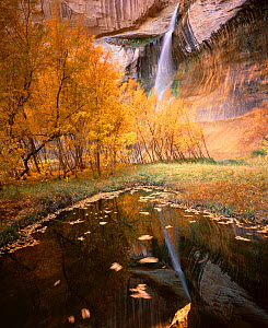Lower Calf Creek Falls with Boxelders {Acer Negundo} and Cottonwoods {Populus fremontii) in the foreground, autumn colours, Grand Staircase - Escalante National Monument, Utah  -  Jack Dykinga