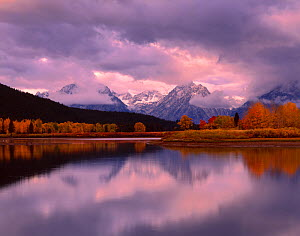 Willow, Cottonwood and Aspen trees on the banks of the Oxbow Bend, Snake River, at dawn, Teton mountain range in the background, Grand Teton National Park, Wyoming, USA - Jack Dykinga