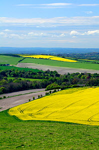 Rural Wiltshire landscape with fields of oilseed rape (Brassica napus) in full bloom, UK, spring 2009 - Nick Upton