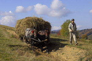 Farmer with traditional horse drawn cart loaded with hay, near Zarnesti, Transylvania, Southern Carpathian Mountains, Romania, October 2008 - Wild Wonders of Europe / Dörr