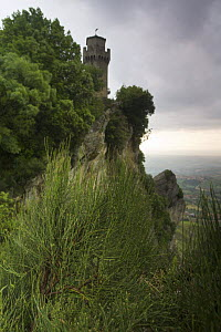 Ephedra (Ephedra major) on the cliff's edge of Monte Titano with the Third Tower (Montale) San Marino, May 2009  -  Wild Wonders of Europe / Möllers
