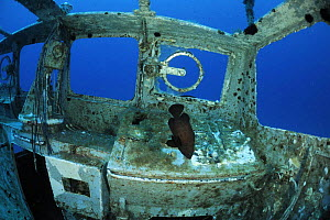 Fish swimming around in the wreck of P29 patrol boat, Malta, Mediteranean, May 2009  -  Wild Wonders of Europe / Zankl