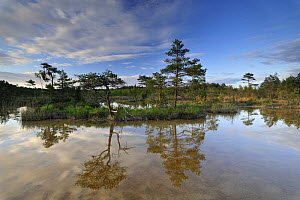 Hydrogen sulphide (H2S) pond with trees reflected in water, Bog forest, Kemeri National Park, Latvia, June 2009 - Wild Wonders of Europe / López