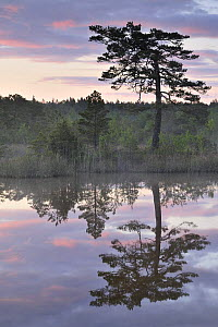 Hydrogen sulphide (H2S) pond with trees reflected in water at dusk, Bog forest, Kemeri National Park, Latvia, June 2009 - Wild Wonders of Europe / López