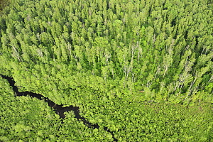 Aerial view of forest with a stream flowing through it, Kemeri National Park, Latvia, June 2009 - Wild Wonders of Europe / López