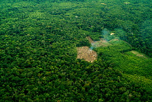 Aerial view of rainforest clearance for agriculture, small-scale deforestation slash and burn, Amazon rainforest, Peru  -  Mark  Bowler