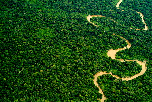 Aerial view of Amazon rainforest with river, Peru  -  Mark  Bowler