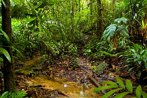 Tropical rainforest habitat near the Yavari river, Peru  -  Mark  Bowler