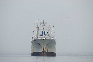 Commercial fishing trawler off Paracas peninsula, Peru, 7th August 2007.  Fishery off the coast of Peru Produces 10% of the worlds fish and is severly effected by 'El Nino' years which are becoming mo...  -  Mark  Bowler
