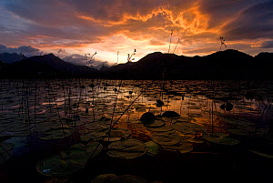 Lake Skadar at sunset, Lake Skadar National Park, Montenegro, May 2008. - Wild Wonders of Europe / Radisic