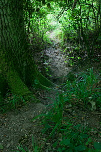 Path created by Fallow Deer run between field and woodland, Sussex, UK - Stephen Dalton